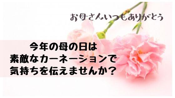 母の日!カーネーションの花束を選ぼう!母への愛を形にしませんか?【2020年最新版】